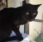 Image of a black cat with yellow eyes sitting on top of a white box in front of a window.