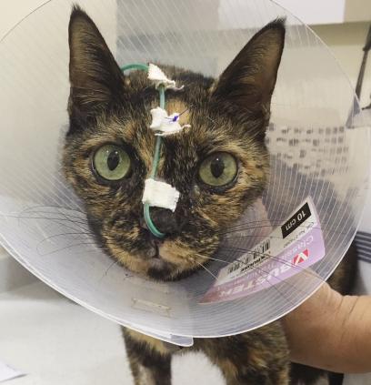 Assist Feeding Syringe Feeding Feline Disease Management